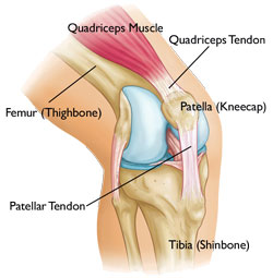 Image from orthoinfo.aaos.org