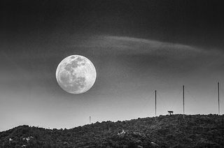 Moon by See-Ming Lee