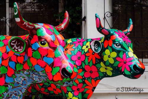 Colourful Cows - S Writings
